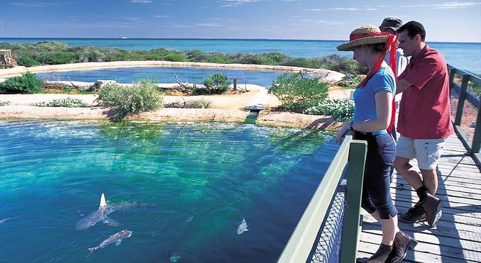 Denham Australia  city photos : ... NZ & South Pacific Australia Western Australia Coral Coast Denham