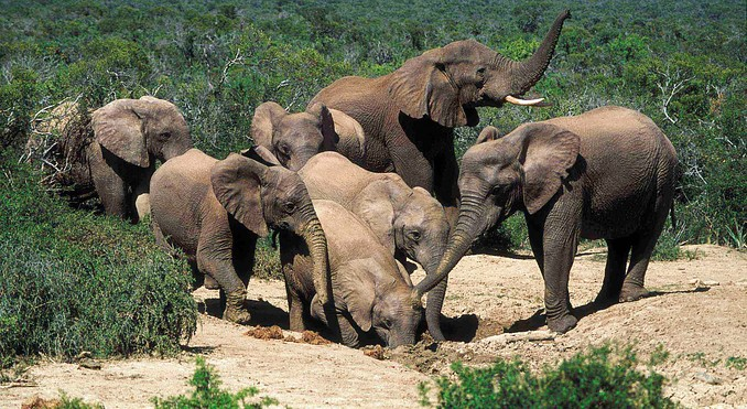Addo National Park
