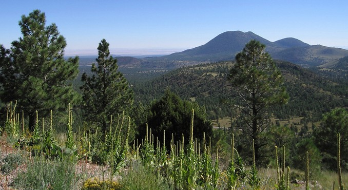 Image courtesy of Flagstaff Convention and Visitors Bureau